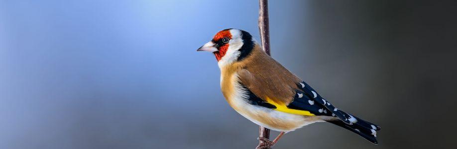 خبراء الطيور Cover Image