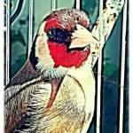 التجمع المغربي لعلم الطيور Profile Picture