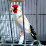 Amine Ziamni Profile Picture